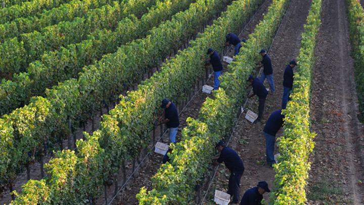 Del Pedregal Family Vineyards