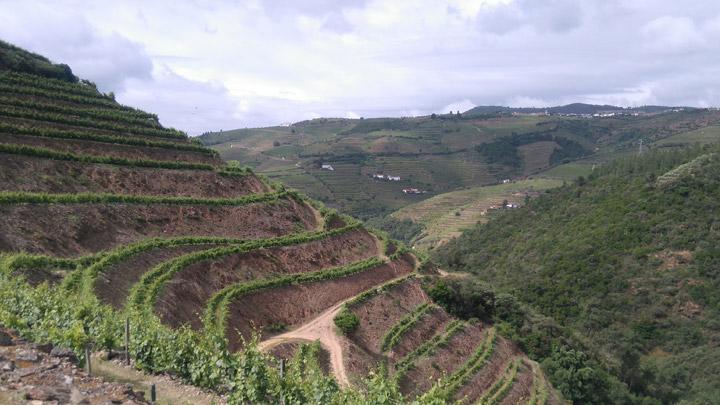 Quinta do Portal Vineyards